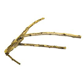 White Acacia Branch