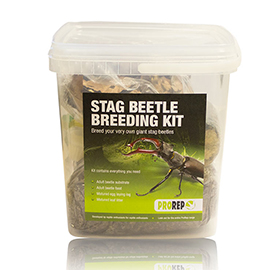 Stag Beetle Rearing Kit