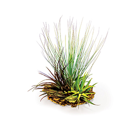 ProRep Airplants on Cork