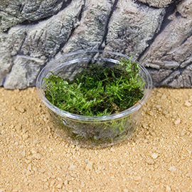 Mosses & Liverworts