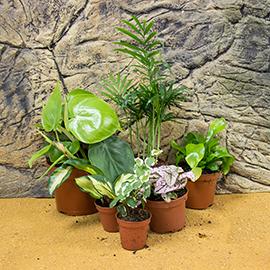 Humid Live Plants