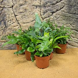 Mid Humidity Live Plants