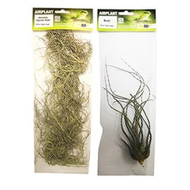Large Airplants