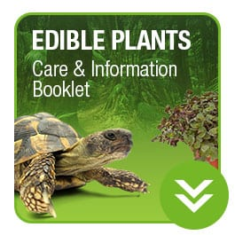 ProRep Edible Plant Care Booklet