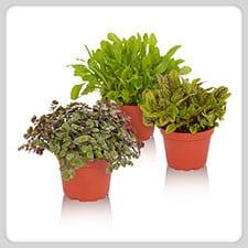 ProRep Edible Plants